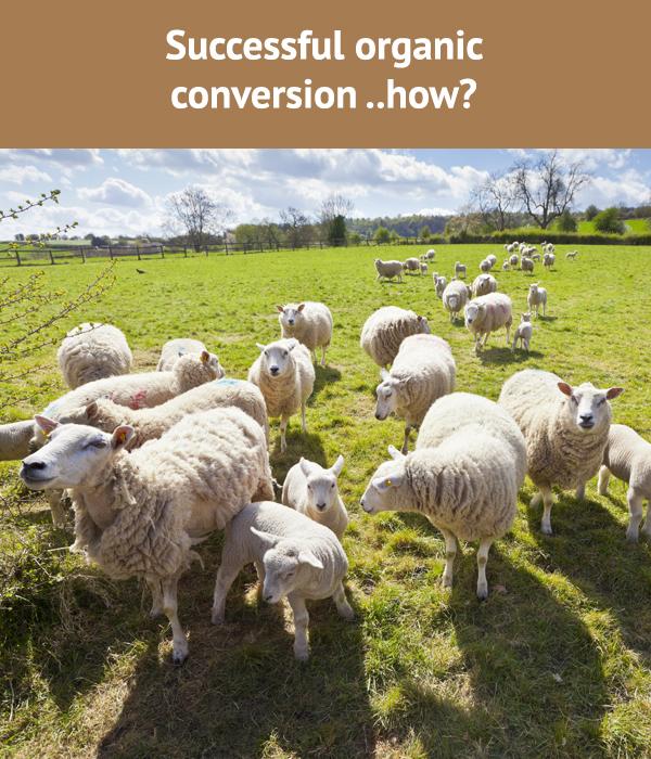 Successful Organic Conversion